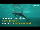 23 июля Всемирный день защиты китов и дельфинов