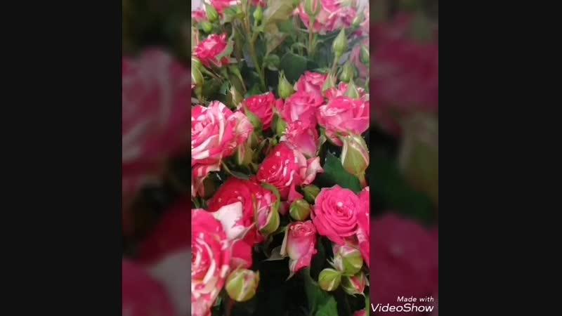 VID_38060215_160439_178.mp4