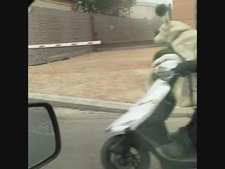 Собака на мопеде в Ставрополе