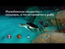 Черепаха Барбарис в Москвариуме ВДНХ