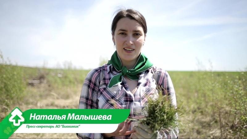 Посади лес Республика Мордовия Рузаевский район