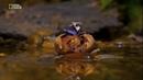 Джунгли Мир Животных и Дикой природы Документальный фильм HD