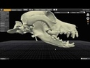 Перелом нижней челюсти у собаки: остеосинтез с применением предоперационного планирования