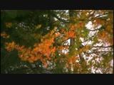 Лариса Луста А мне раскладывал пасьянс осенний лес