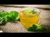Лечебная трава мелисса или лимонник на Вашем подоконнике 8 лучших рецептов