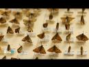 08.07.2018-Заповедник``Кивач``.Россия,2013г.Дата-08.07.2018г.,2315мск.Источник-RTG-TV HD
