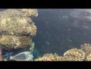 красота Красного моря!