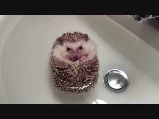 Ёжик в ту... в ванне