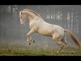 Equestrian Music Video- Lost Boy