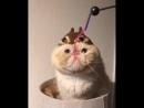 Всратые еблеты котов