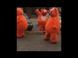 Танцы котов