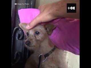 Спасли дрожащую от страха собаку