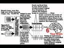 Silent Sound Mind Control Explained Parts 1 2: Live Hypnotist or Pre-Recorded Brain Waves