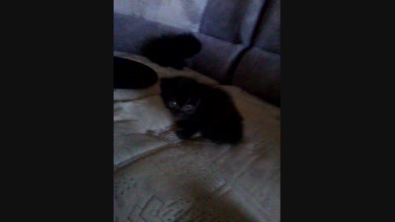 Video-2016-05-05-19-09-56.mp4