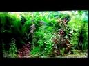 Интерактивный аквариумный туризм Сезон 4 Выпуск 21 Польский Low Tech