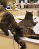"""🐾Пушистые и не очень👇 on Instagram """"🙊🔊😂😂😂 ★ 💜С Любовью @KOTO__MANIA😽 ★ 🐾kotomania котомания 🐾 животные animals коты cat"""""""