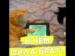 Котик без задних лапок нашёл себе друга!