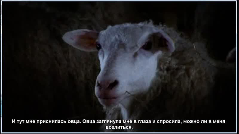 A.Wild.Sheep.Chase.-.In.Search.Of.Haruki.Murakami.[2008.TVRip.DivX]