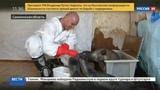 Новости на Россия 24 На Сахалине учатся спасать млекопитающих