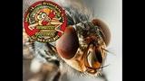 Дезинсекция от мух Лысьва Чусовой Тел 89194802521