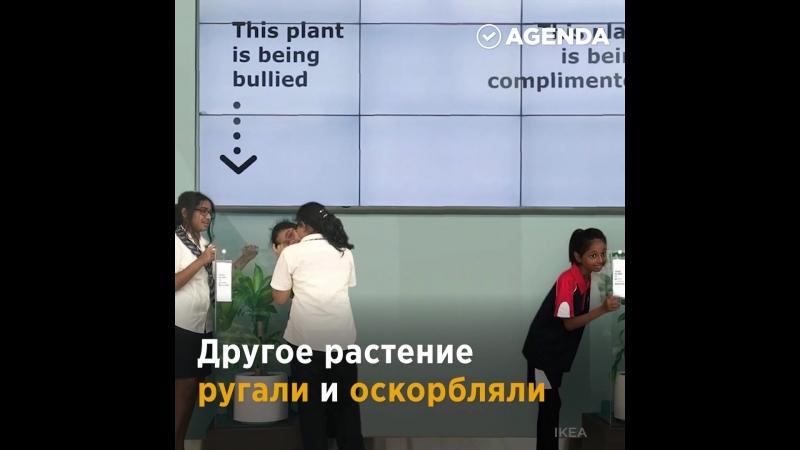 Чувства растений