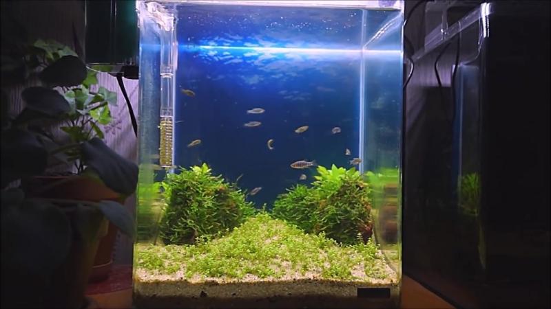 Обзор всех моих нано аквариумов