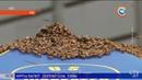 В США разъярённые пчёлы атаковали палатку с хот-догами