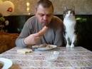Кот просит сосиску.Хозяин в шоке от своего кота.Кот попрошайка.