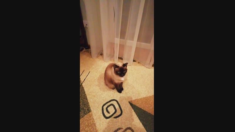 Моя кошка Мотя 😀
