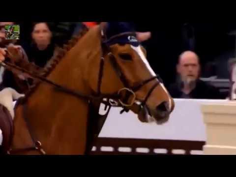 Верховая езда и конный спорт. Троеборье, Выездка и Конкур