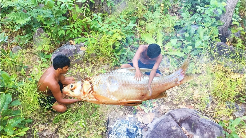Find Big Fish for eat in forest