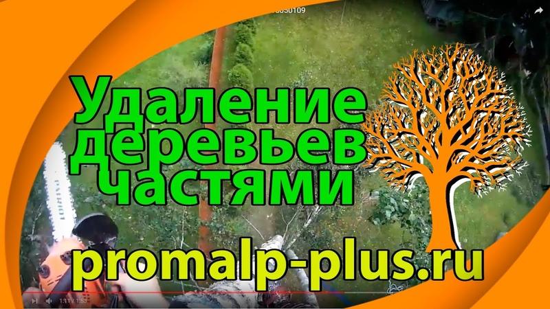 Спиливание деревьев без автовышки частями - Череповец, Вологда 89115050109