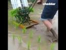 Инструмент для высадки риса