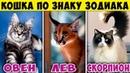 КАКАЯ ПОРОДА КОШКИ ПОДХОДИТ ТЕБЕ ПО ЗНАКУ ЗОДИАКА. Какая ты Кошка по Знаку Зодиака