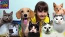 Моё УТРО осеннее школьное и Мои ПИТОМЦЫ Коты, Кошки, Котенок, Собаки, Крыски My morning routine
