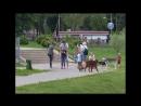 Сюжет МКТВ о выгуле собак