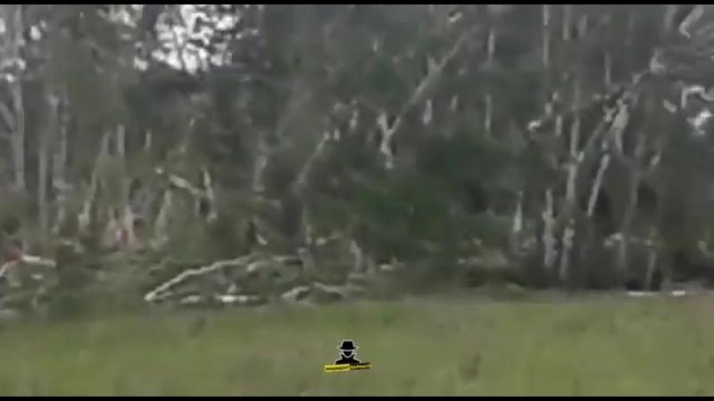 Последствия прохождения торнадо вблизи села Новоярки, Каменский район, Алтайский край. (19 Июня 2018)