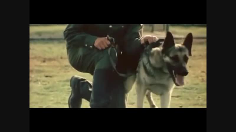 Прикладная дрессировка Дрессировка пограничных собак СССР 1979