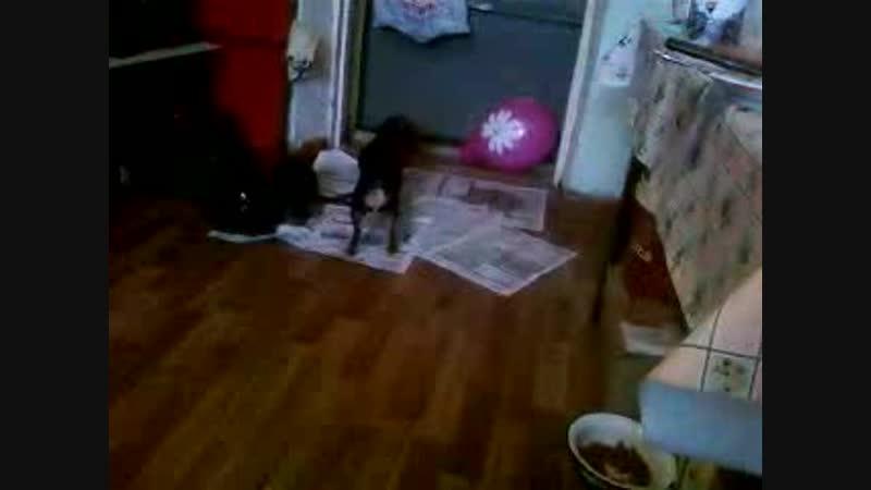 Маленькая КНОПОЧКА и шарик