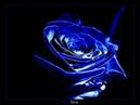 Teebee - Blue Rose