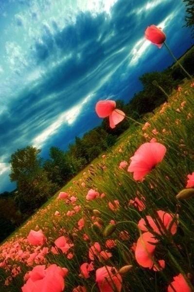 счастье - это каждый прожитый день. жизнь - это подарок. все самое гениальное до изумления просто.