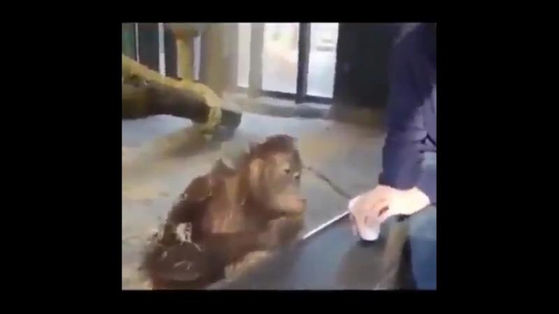обезьяныч жжёт