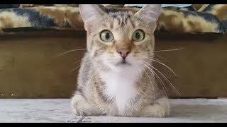 Superrr Funny CATs 3