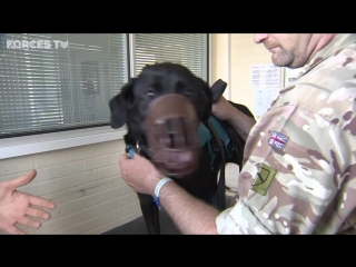 How british army dogs and horses are trained - forces tv