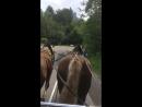 Тяжело идти в гору лошадкам