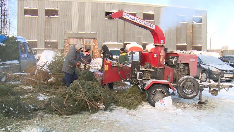 Елки в щепки медведей рысей и лисиц согреет древесина новогодних елей петербуржцев ФАН ТВ