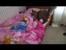 Кошка будит девочку в школу