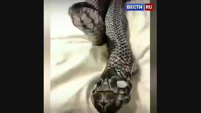Колготки-змеи привели к трагедии.