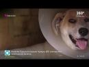 Три подруги из Одинцово отказались от комфортной жизни из за бездомной собаки