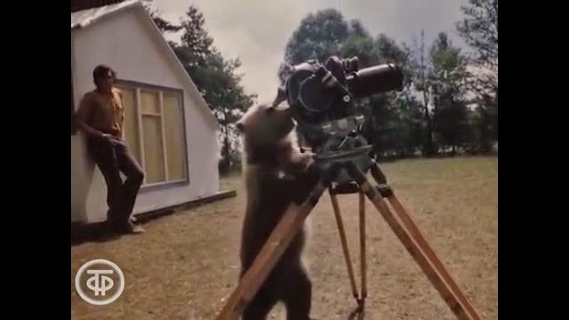 Приключения медвежонка Ниды. Черные аисты, олененок и Нида (1978г.)